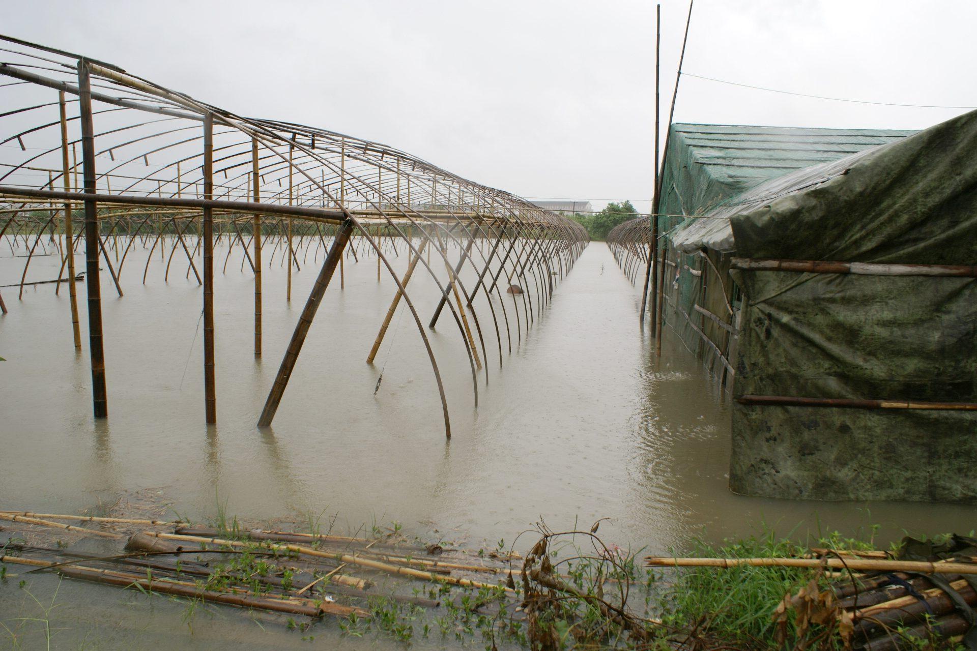 蔬菜和水稻灾后生产补救措施