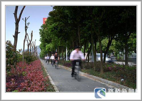 绿荫下的自行车道